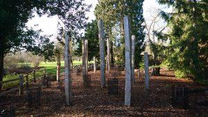 oak poles